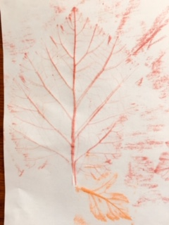 The outline pattern of a leaf, picked out in red crayon on a sheet of white paper