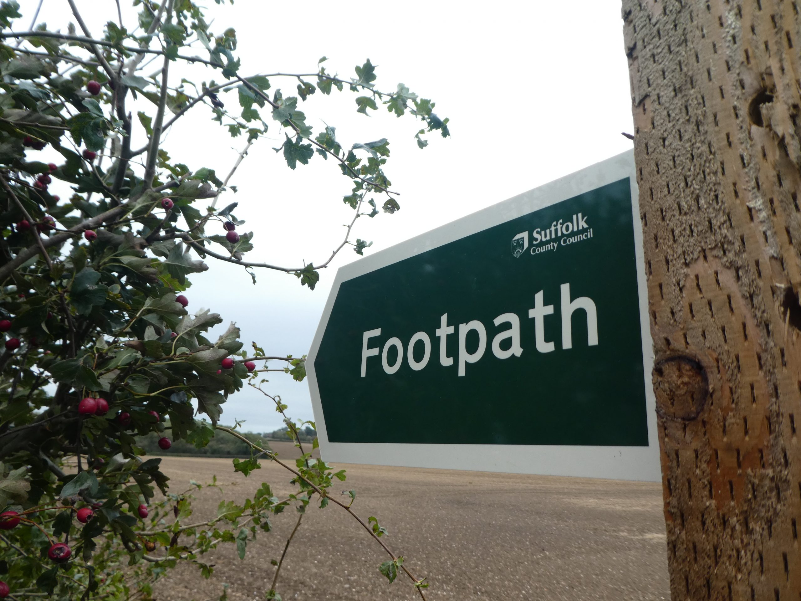A green sign reading Footpath beside a hedge with red berries