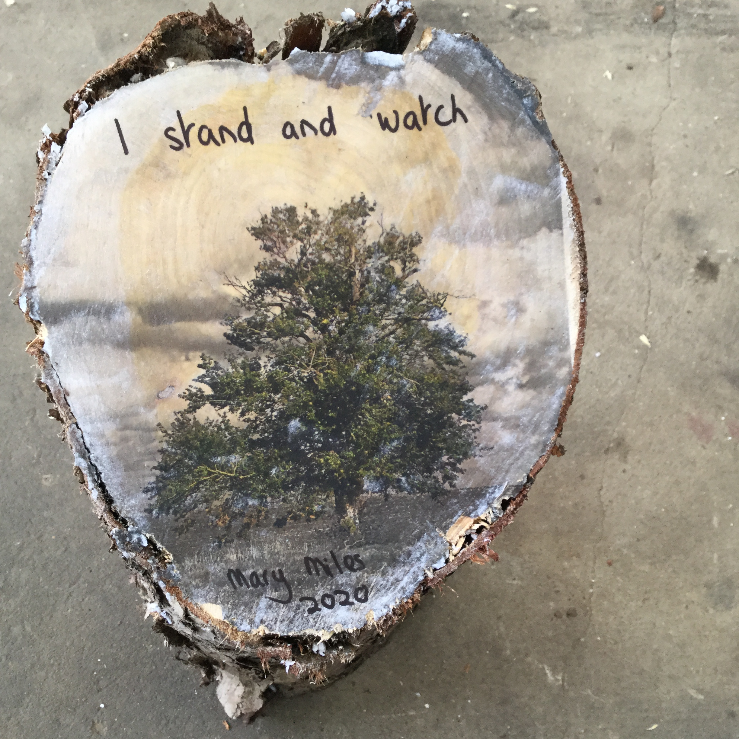An image of a tree with the caption I stand and watch