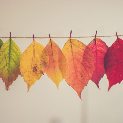A row of brightly coloured leaves hanging from a line of string