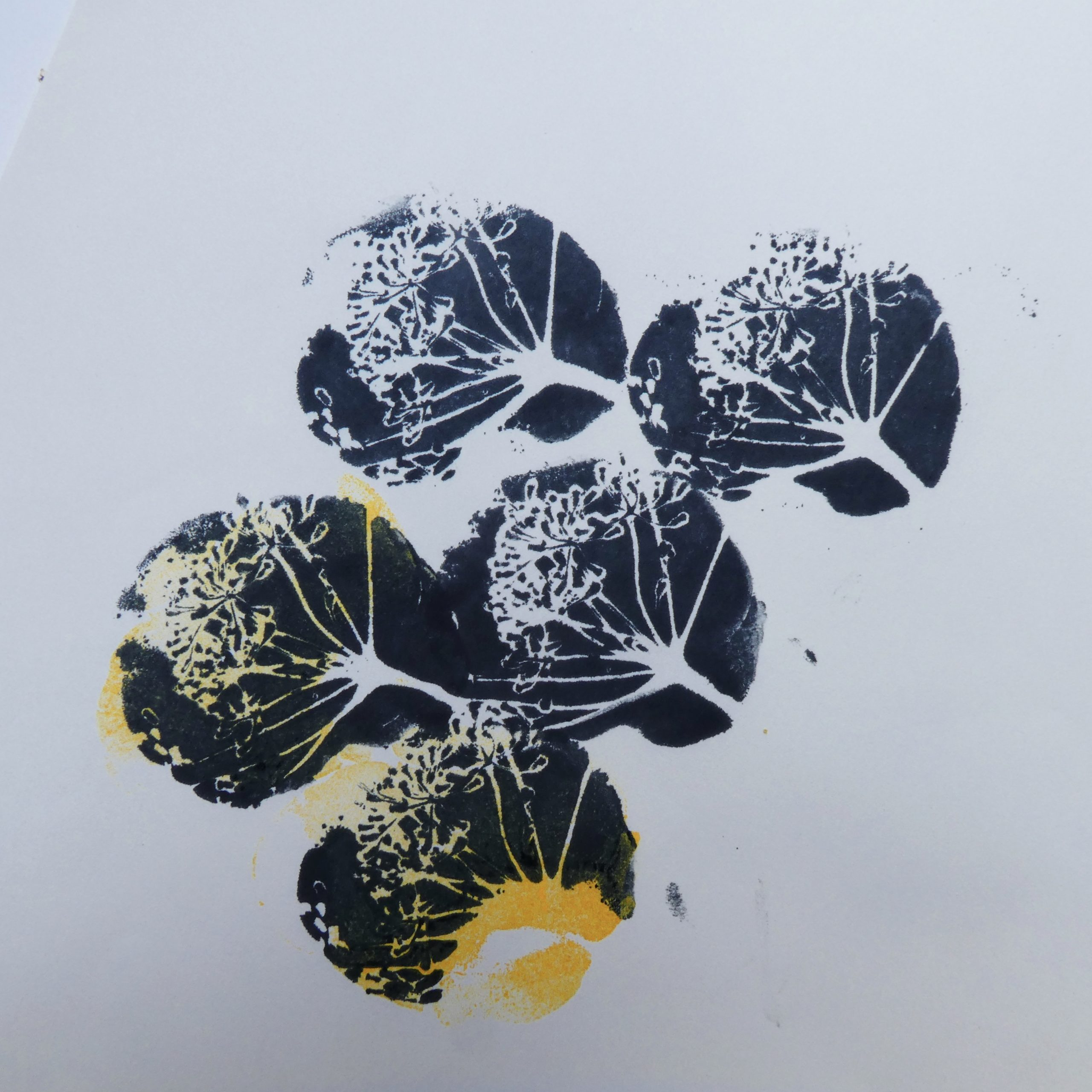 Five seed head prints in black and yellow