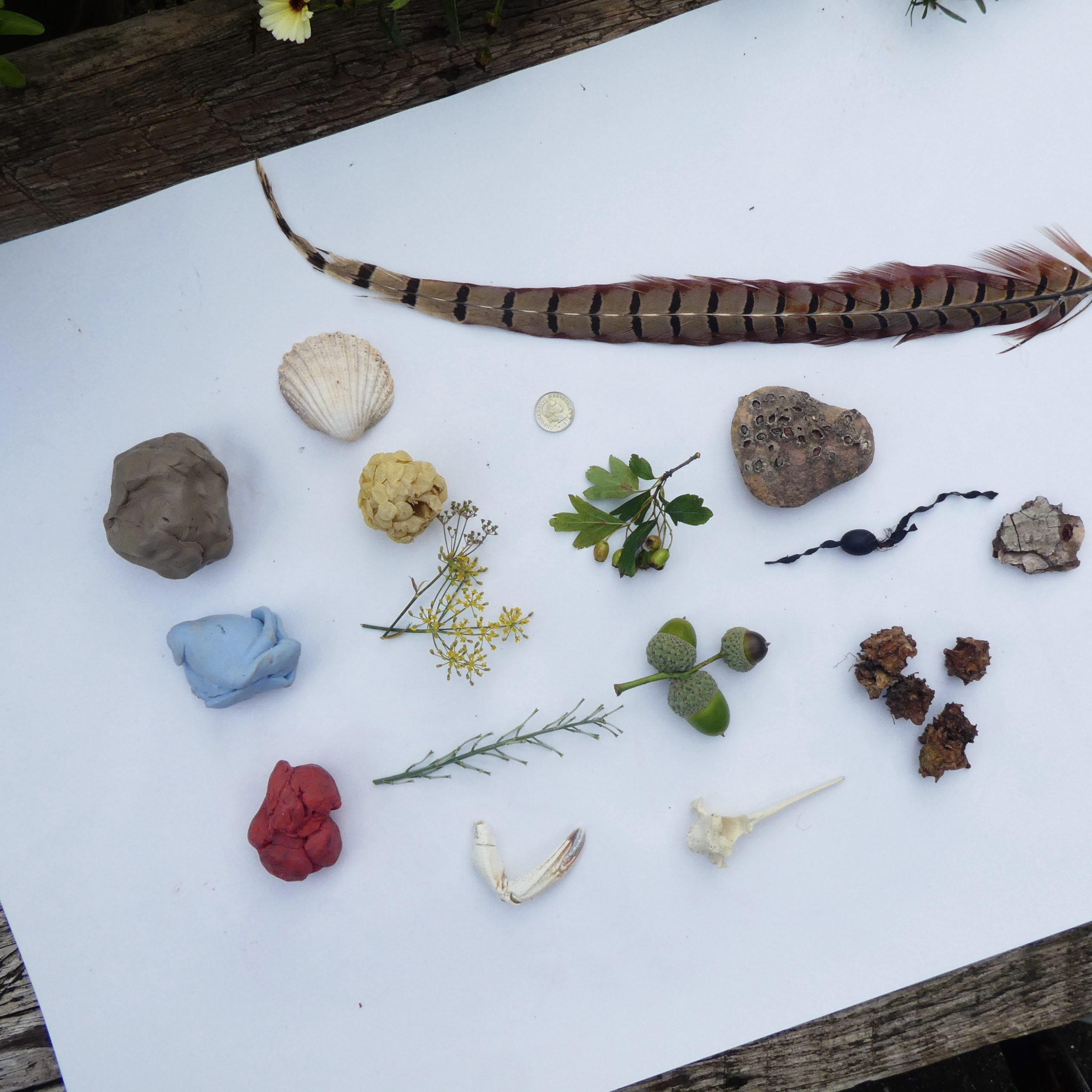 A collection of blutack, seed heads and feathers